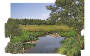 Land scape design